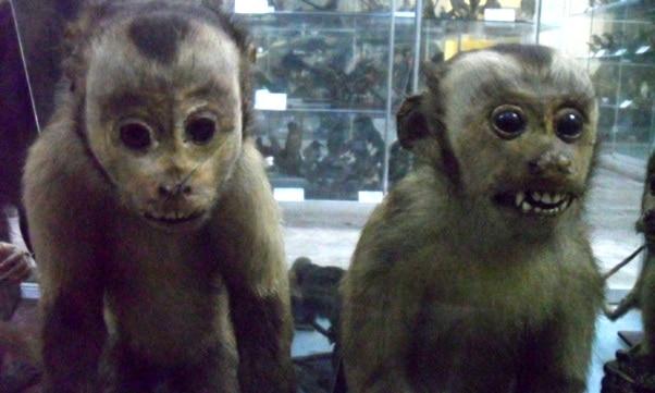 Trujillo Museo de Zoologia, Peru