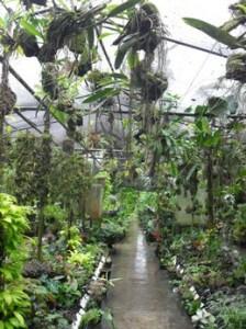Inside Agro Oriente Viveros, Moyobamba