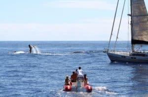 Whale watching Mancora - Itinerary Peru