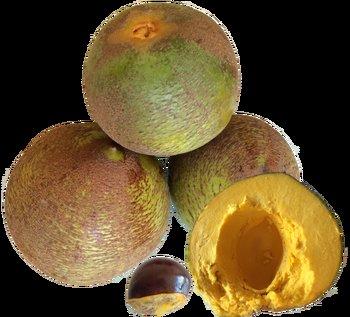 peruvian fruits and vegetables - lucuma fruit
