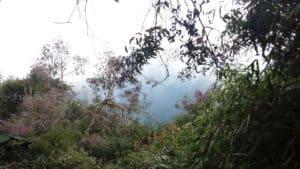 Inca Jungle Trek Peruvian Jungle