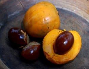 Lucuma Fruit Eggfruit from Peru