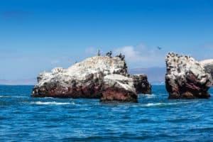 Ballestas Islands Poor Man's Galapagos Paracas Pisco Peru