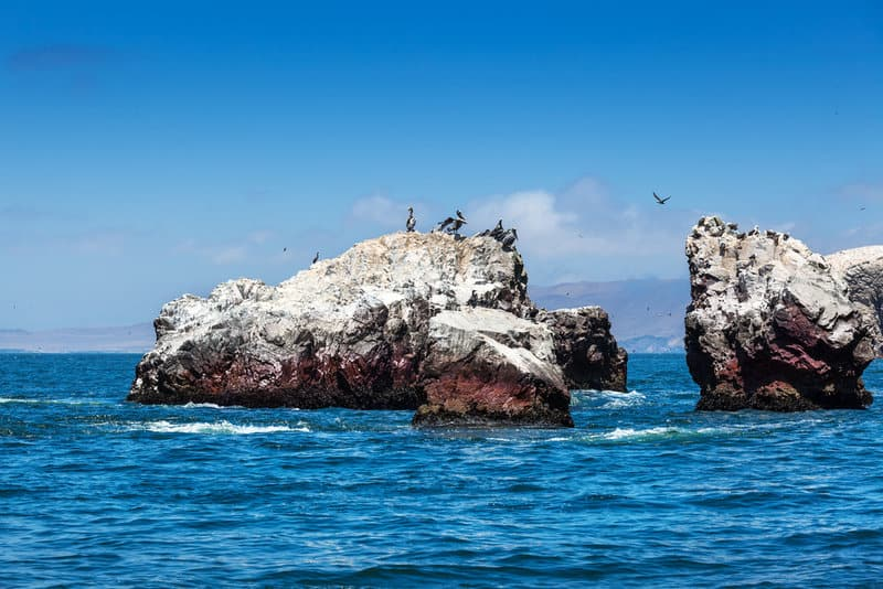 Ballestas Islands Poor Man's Galapagos Paracas Pisco Peru