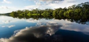Lake Sandoval Beautiful Oxbox Lake in Tambopata National Reserve in Peruvian Amazon Jungle
