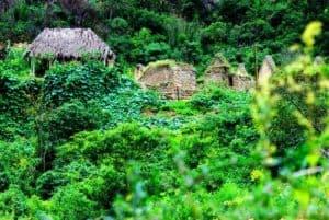 Jungle Trek To Machu Picchu
